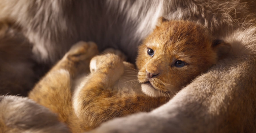 Lion King Teaser Still 1